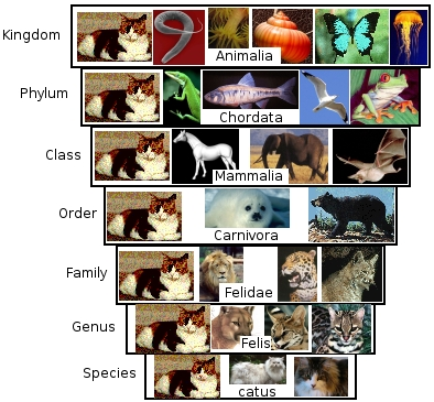 Description: Classification of the house cat